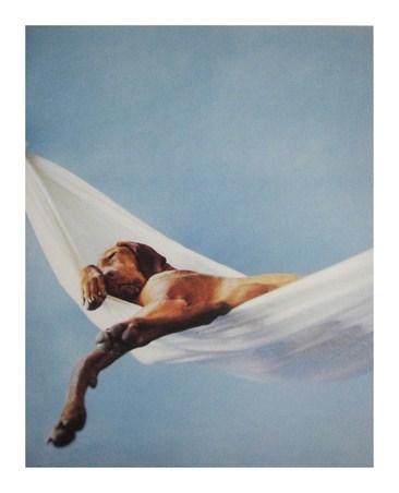 Framed Lazy Afternoon - Rachael Hale