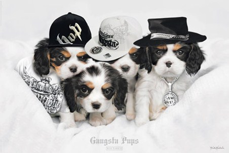 Gangsta Pups - Keith Kimberlin