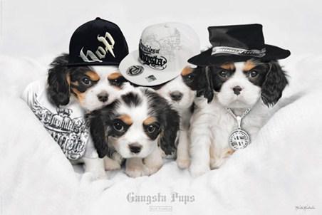 Framed Gangsta Pups - Keith Kimberlin
