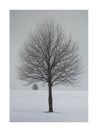 Winter Tree - Ilona Wellman