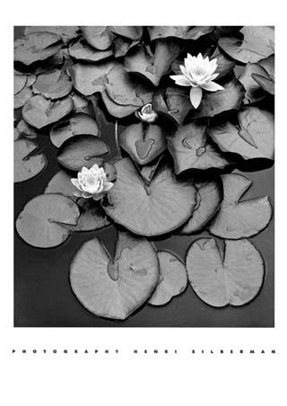 Waterlilies henri silberman mini poster