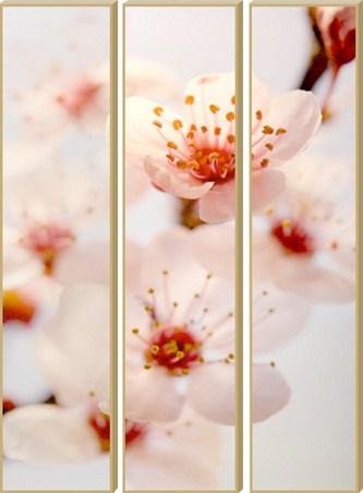 A Trio of Blossom - Cherry Blossom