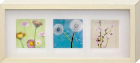 Blooms - Natalie Lane