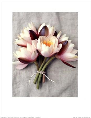 Water Lilies - Mikkel Vang