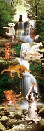 The Downward Dog - Yoga Dogs