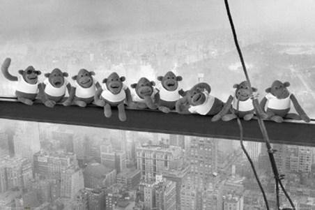 Monkeys on a Girder - Animal Humour