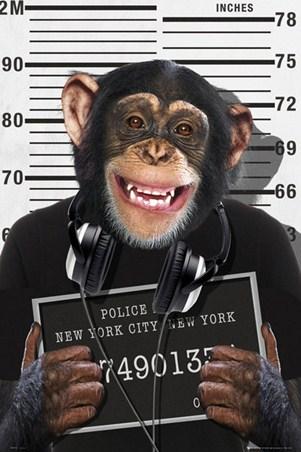 Mugshot - Chimp