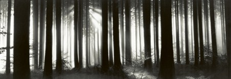Black Forest - Germany - Helmut Hirler