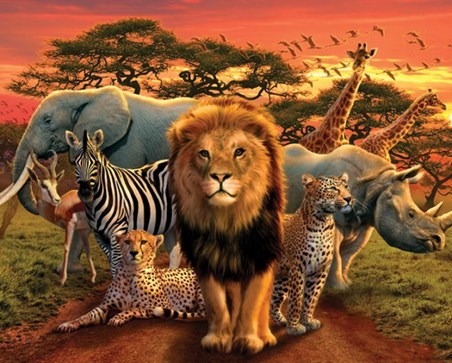 Wild Animals - African Kingdom