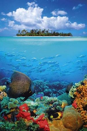 Underwater Tropics - Down Where It's Wetter!