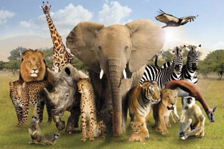 Wildlife Harmony - Wild Animals