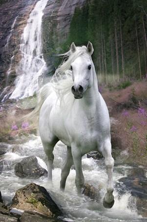 Horse in a Waterfall - Bob Langrish