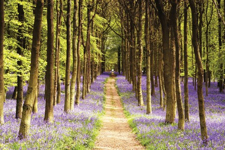 Woodland Path, Luscious Spring Landscape