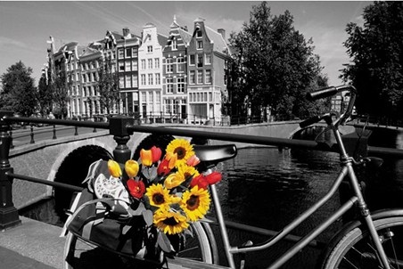 Tulips from Amsterdam - Traditional Dutch Canalside Scene