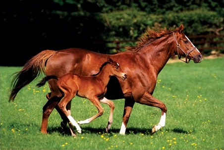 Framed Chestnut Mare and Foal - The Beauty of Horses