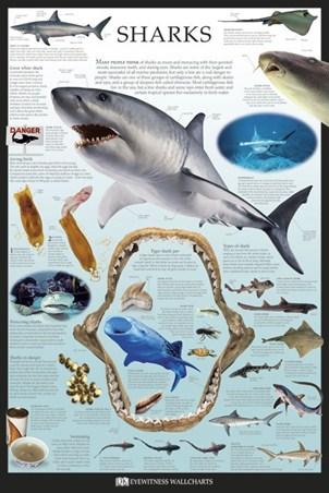 Sharks - Dorling Kindersley