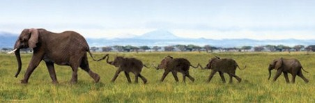 Elephants Linking Trunks - Wild Family