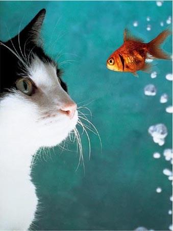 Cat and Fish - By  Vikki Hart