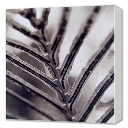 Vascular-Xylem and Phloem - Leaf Detail Canvas