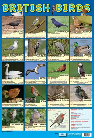 British Birds - Native British Birds