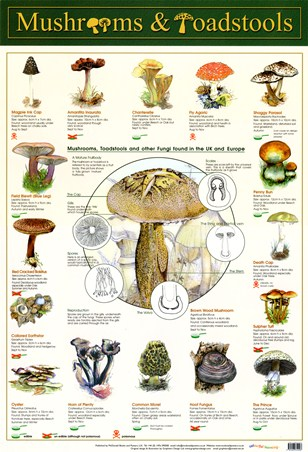 Framed Mushrooms & Toadstools - Fungi