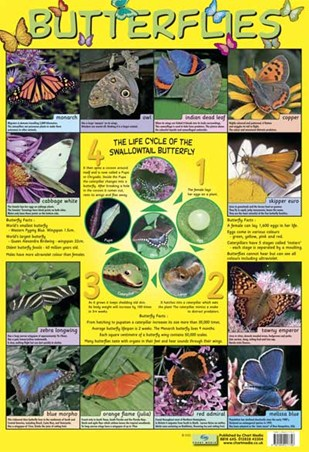 Framed Butterflies - Life Cycle