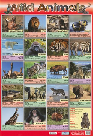 Time To Go Wild! - Wild Animals