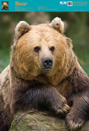 Nature's Big Teddy Bear - Bear
