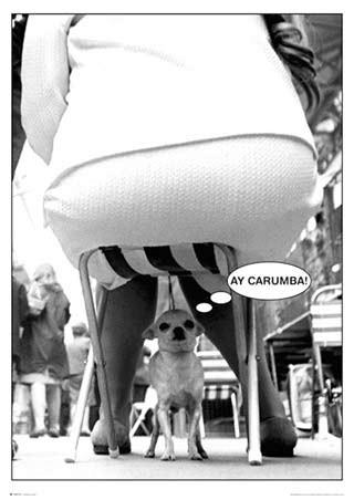 Framed Ay-Carumba - Dog Under Chair