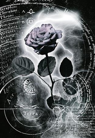 Mercury Rose - Lightning Rose