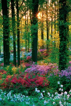 A Feast of Colour - Flowers in the Forest