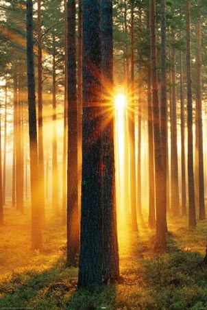 Breaking Through the Trees - Sunbeams in the Forest