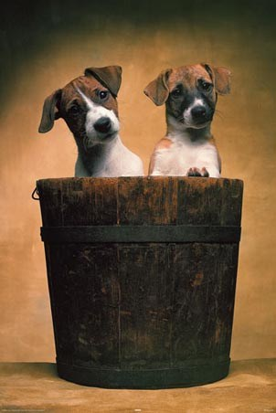 Sitting in a Bucket - Adorable Puppies