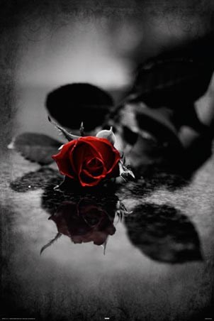Blood Red Petals Gothic Rose Poster Popartuk