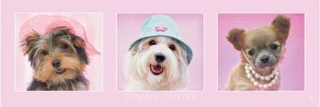 Canine Cuties - Rachael Hale