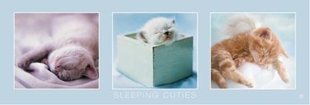 Sleeping Cuties - Rachael Hale