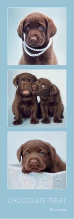 Chocolate Labrador Retriever Treats - by Rachael Hale