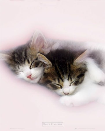 Kittens Sleeping - By Keith Kimberlin