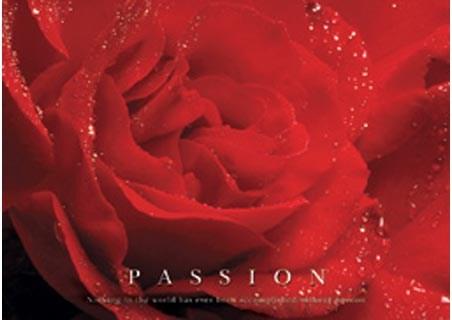 Framed Rose Bloom - Passion, Inspirational