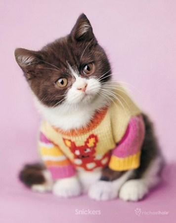 Snickers the Kitten - By Rachael Hale