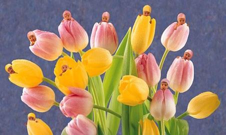 Tulips - Anne Geddes