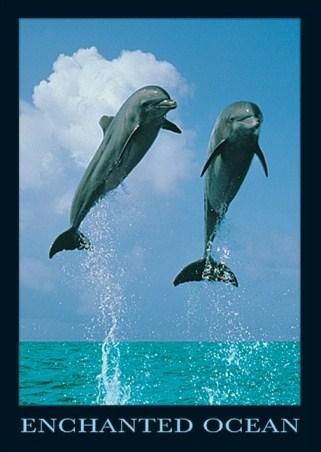 Framed Dolphins Jumping - Enchanted Ocean