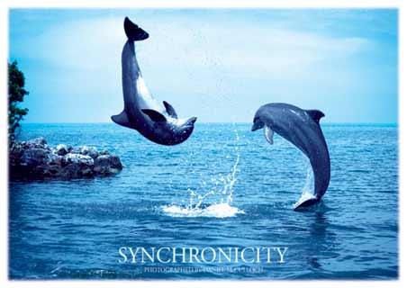 Synchronicity - by Daniel McCulloch
