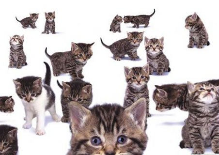 Curious Kittens - Kittens