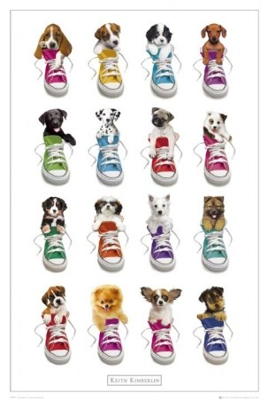 Puppies in Trainers - Keith Kimberlin
