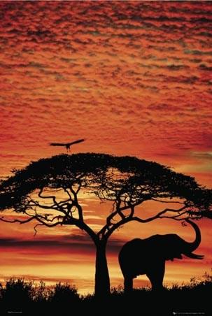 Safari Silhouette - African Sunset