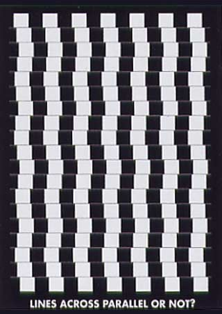 The Café Wall Illusion - Optical Illusion