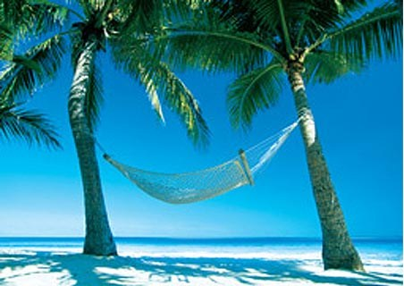 Hammock in the Sun - Paradise Island
