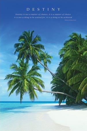 Destiny II - Island Palm Trees