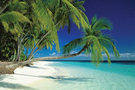Maldives Beach and Sea, Palm Trees on a Tropical Island Paradise